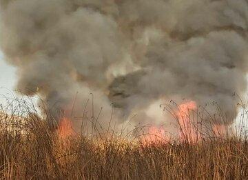 آتش عمدی در جان نیزارهای رودخانه اترک