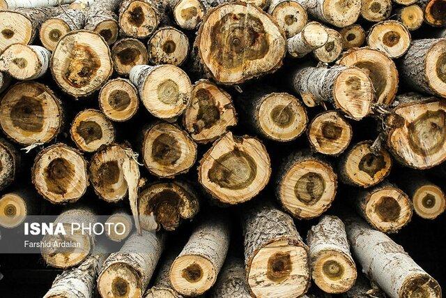 قاچاقچیان چوب روز بهروز بیشتر و حرفهایتر میشوند