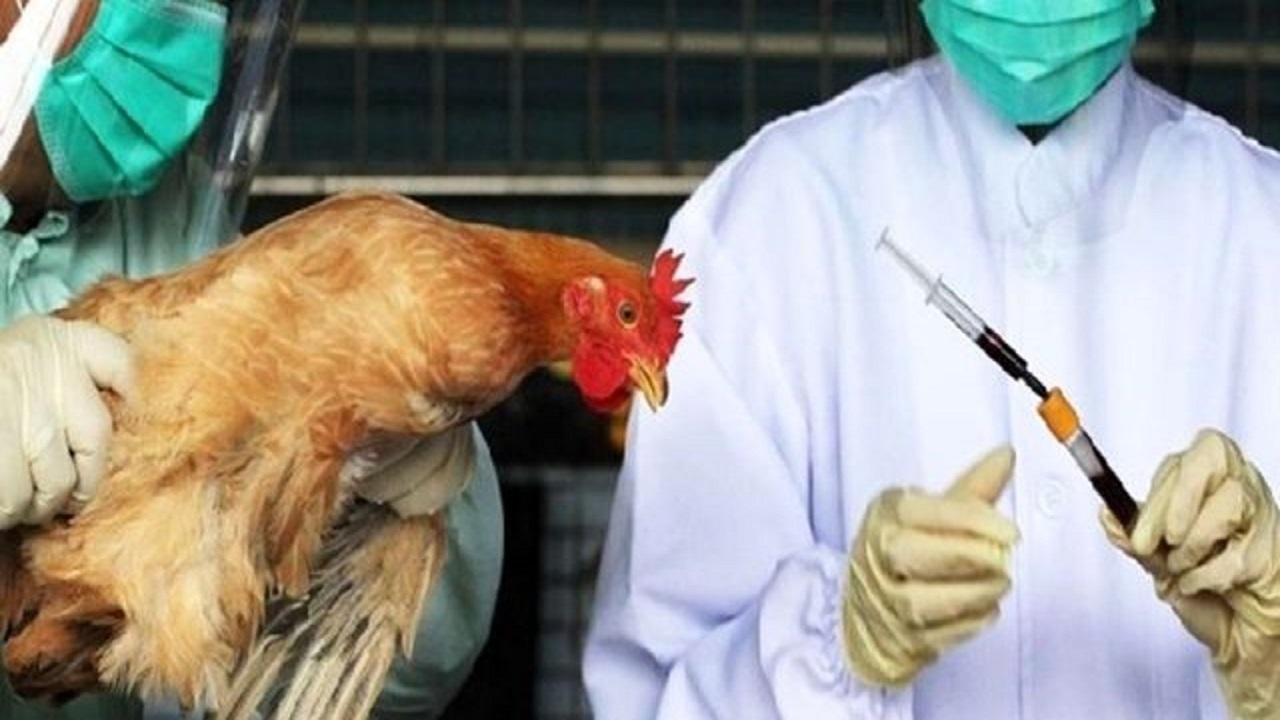 شناسایی ۵ کانون شیوع آنفلوآنزای فوق حاد پرندگان در کردستان