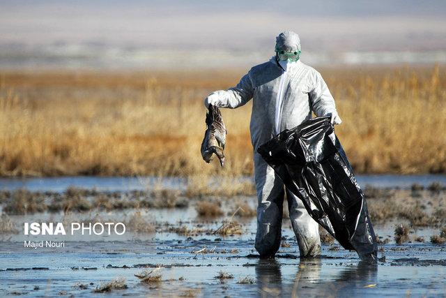 هنوز ردپای آنفلوانزای فوق حاد پرندگان در اصفهان مشاهده نشده است