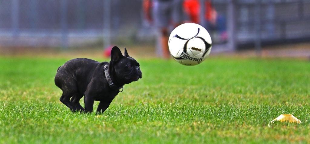 سگها احتمالا خودآگاه هستند و پیامدهای اعمال خود را درک میکنند