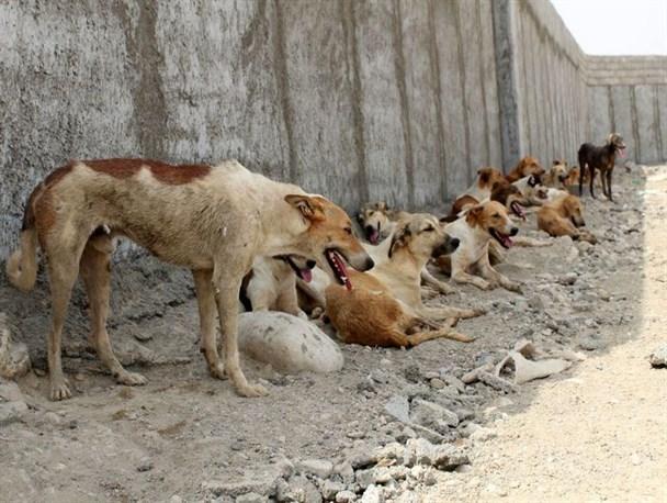 توضیح بخشدار زارچ در خصوص حمله سگ ولگرد به کودک زارچی