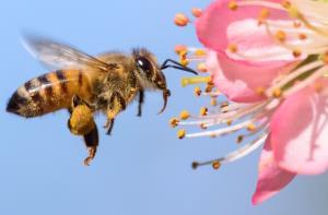 زنبورها آزمون ریاضی حل میکنند!