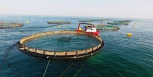 بزرگترین مزرعه پرورش ماهی در قفس خاورمیانه در قشم به بهرهبرداری میرسد