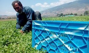 خرید توافقی سه محصول کشاورزی آغاز شد