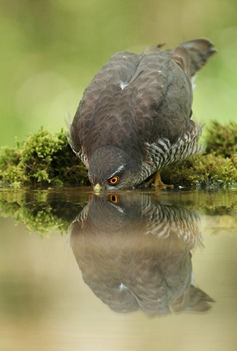 آب خوردن جالب پرندگان