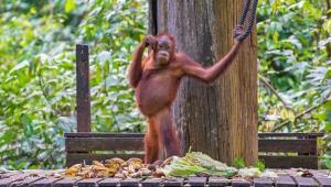 ۱۲ داستان جالب از هوش حیوانات که شما را هیجانزده میکنند