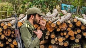 ۳۵ تن چوب قاچاق در دشتستان کشف شد