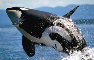 آیا نهنگ و دلفین ها سرطان می گیرند؟