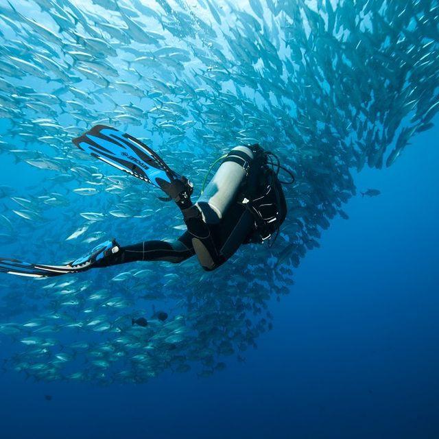 غواصی در آب های فیلیپین