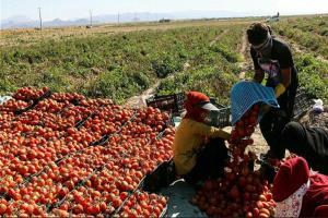 ایجاد «روستابازار» برای عرضه بیواسطه محصولات کشاورزی