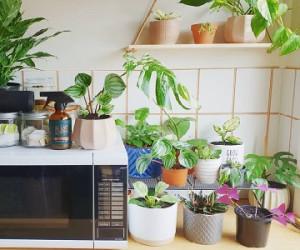 جای این گیاهان در آشپزخانه ی شماست
