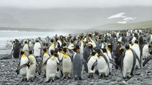 پنگوئن عجیبی که باعت تحیر جهانیان شد