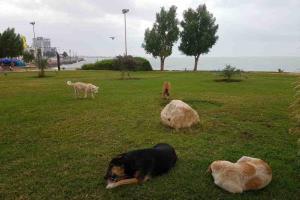 عکس/ پارکهای بوشهر جولانگاه سگهای سرگردان