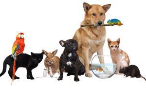 آیا نگه داشتن حیوانات خانگی برای سلامتی ضرر دارد؟
