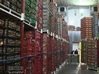 سیب درختی اشنویه درگیر پیچ و خم صادرات