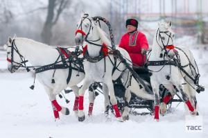 جشنواره اسب سواری در روسیه