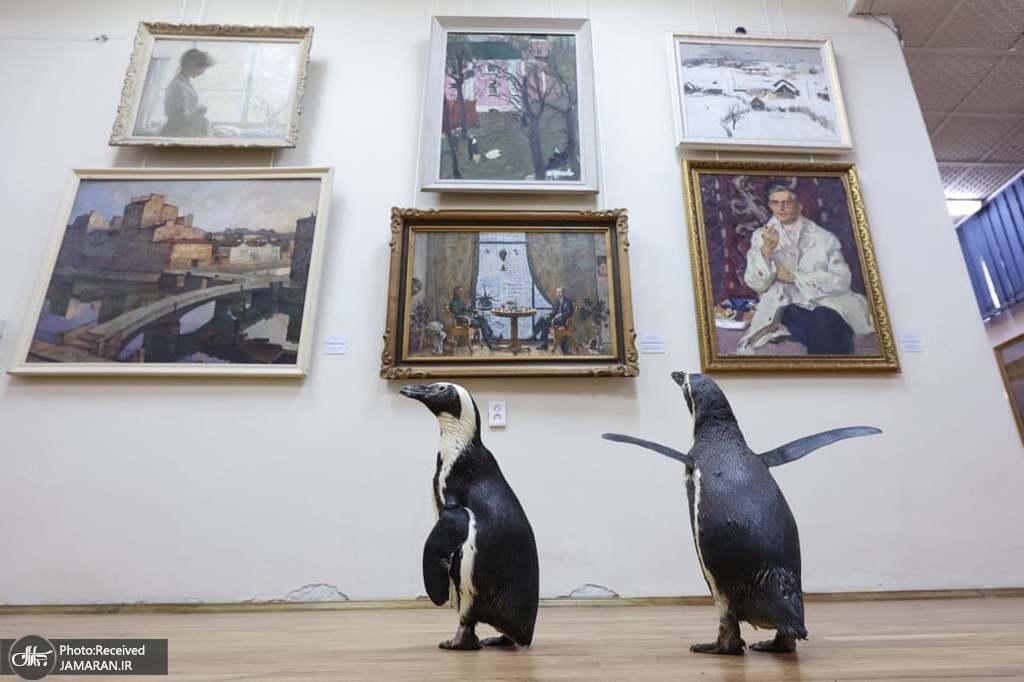 گشت پنگوئن ها در موزه!