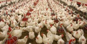 راهاندازی کارخانه تولید آنتی بیوتیکهای دامی در کهگیلویه و بویراحمد