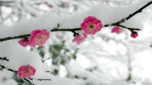 برف و سرما محصولات باغی یزد را از بین برد