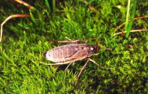 شکار زنده حشرات با کمک جریان هوا