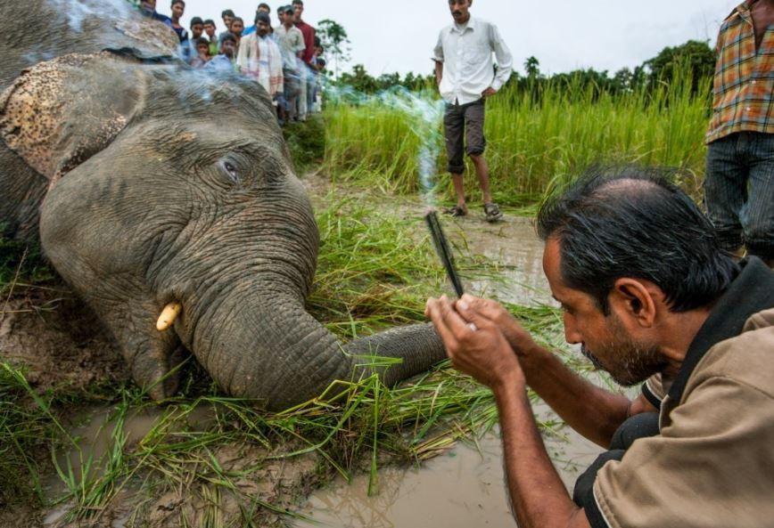 کشته شدن یک فیل در هند