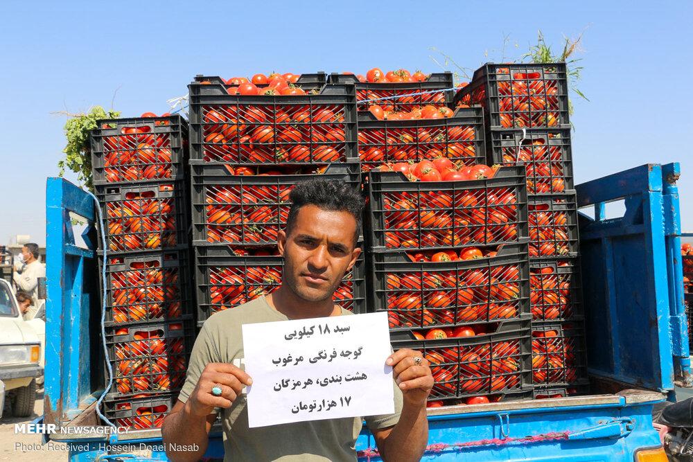 گوجه فرنگی کیلویی ۱۰۰۰ تومان