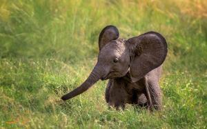 سرسره بازی بچه فیل