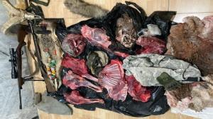 حضور شکارچیان استانهای شمالی در منطقه شاهوار؛ متخلفان دستگیر شدند