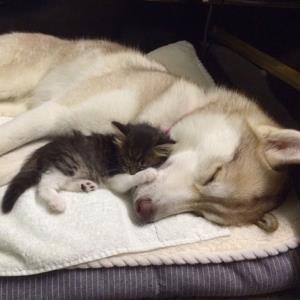 واکنش مادرانه سگ برای بچه گربه ها