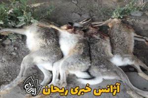 ۲ منتشر کننده تصاویر شکار در فضای مجازی اشنویه دستگیر شد