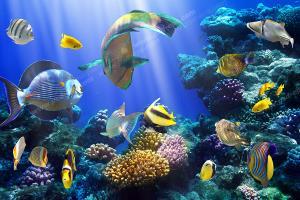 تصاویر دیدنی از اعماق اقیانوس