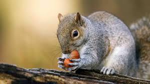 عاقبت سنجابی که میخواست غذا بدزدد!