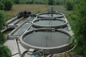 تولید ۶ هزار تن ماهی سردآبی در گیلان