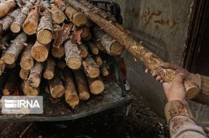 ۲۴ تن چوب قاچاق در ارزوییه کرمان کشف شد