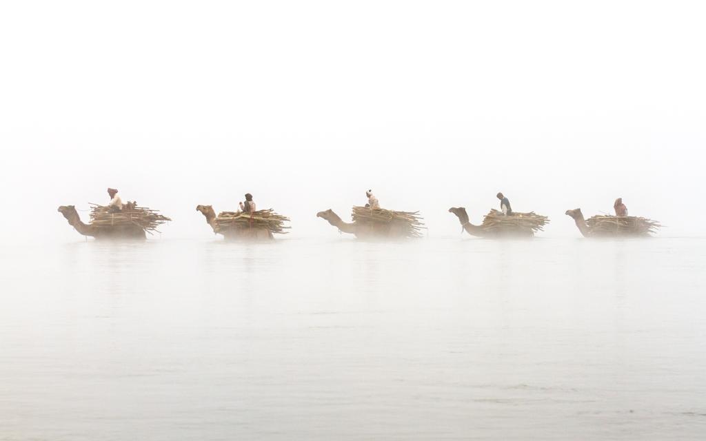 حرکت شتران در مه گرفتگی