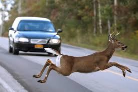 لحظه برخورد وحشتناک گوزنها به یک ماشین وسط جاده