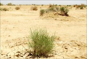 کانونهای بحران فرسایش بادی در خراسان شمالی کنترل شد