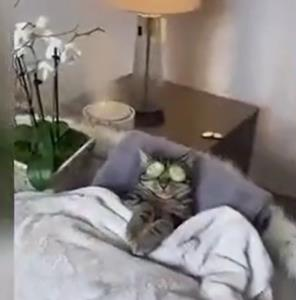 گربه هم داره ریلکس میکنه!