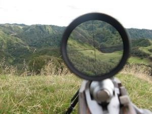 ۲ راس گراز آبستن در ایلام شکار متخلفان شدند