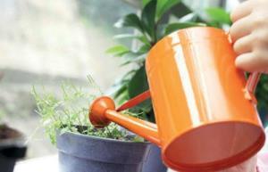 ترفندی شیرین برای آبیاری گلدانهای آپارتمانی