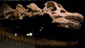 کشف بقایای قدیمیترین دایناسور موجود در کره زمین