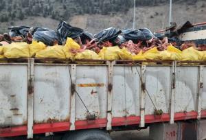 معدوم سازی بیش از ۴ تن اسکلت دام بزرگ در سوادکوه