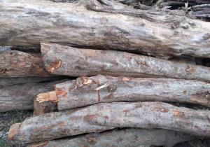 کشف و ضبط محموله ۱۷ تنی چوب قاچاق در اتوبان سیاهکل