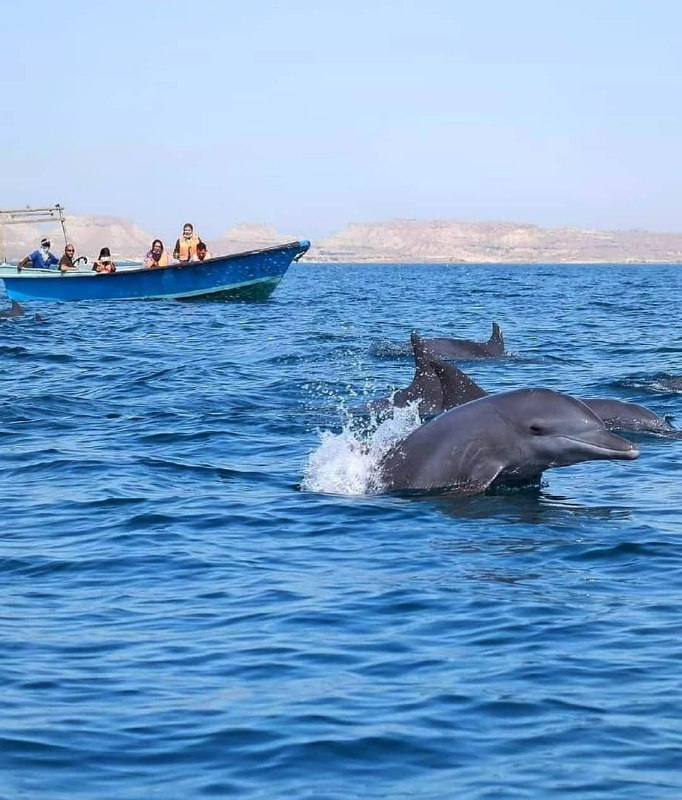 شنای دلفین ها در نزدیکی جزیره هرمز