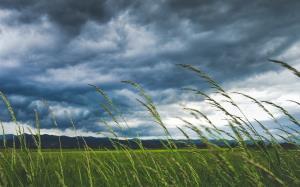 معجزات علمی قرآنی؛ بادهای حاصلخیز کننده