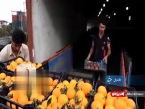 بازار داغ پرتقال با نزدیک شدن به عید