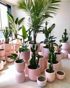 چند راهنمایی برای داشتن گیاهان خانگی سالم