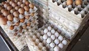 کاهش قیمت تخم مرغ