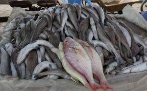 گرانی عجیب و غریب در بازار ماهی